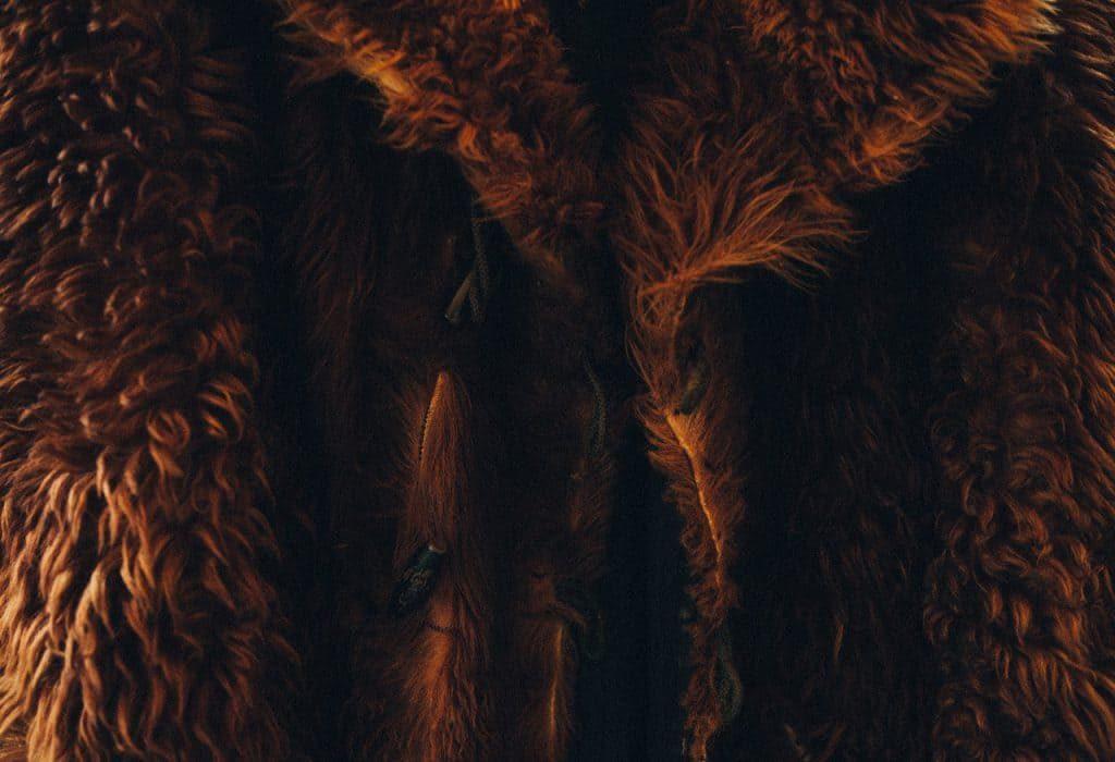 fur-2601301_1280-o9r3ylcltcn2vnodfcwafsl82f8cpvypt67f8wmpnc